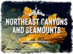 NE-Canyons-Seamounts